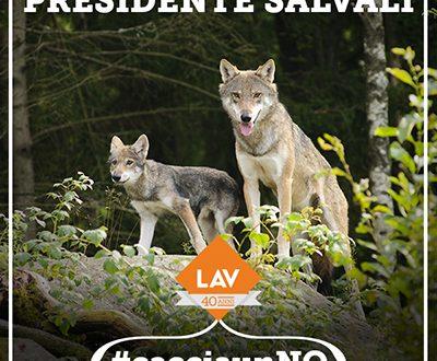#CacciaunNO – Caro presidente Gentiloni, i lupi vanno protetti non uccisi