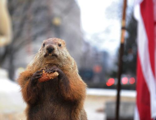 Il giorno della marmotta è arrivato