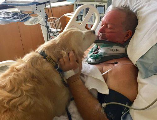 La storia di Kelsey, il golden retriever che salvò la vita al suo papà umano