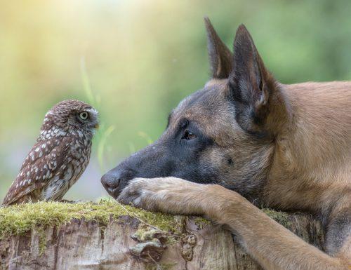 Il cane Ingo e la civetta Napoleon